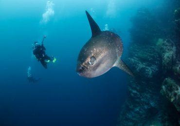 Galapagos Moonfish